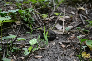 See if you can spot the frog. I'm pretty proud that I spied him.
