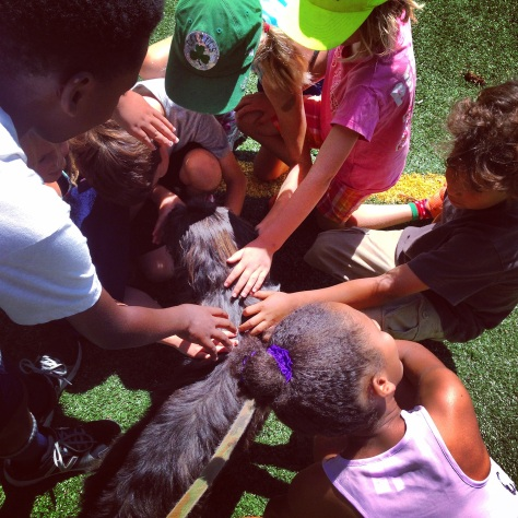 And Beatz had the Best Day Ever when the camp kids learned they could pet her.