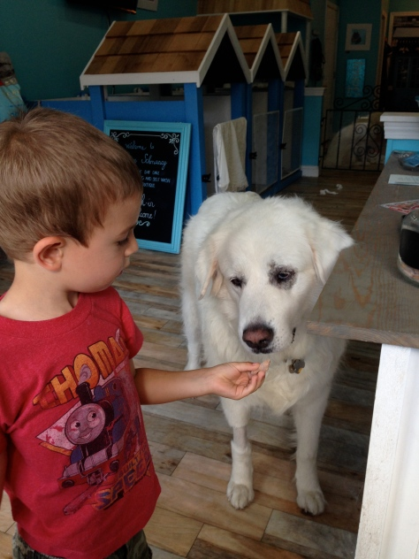 George fed Nunu a treat.